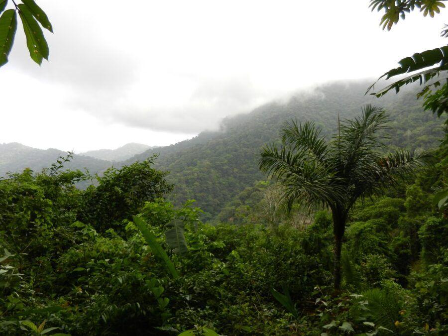 Cómo llegar a Parque nacional Darién, Panamá