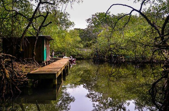 Cómo llegar a Parque nacional Isla Bastimentos, Panamá