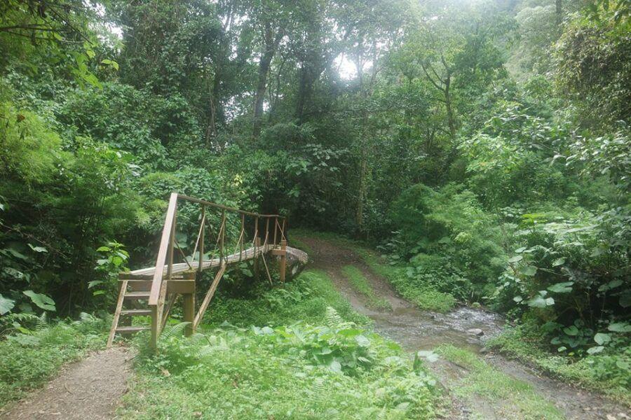 ¿Cómo llegar al sendero los Quetzales, Panamá?